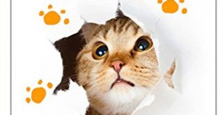 The experts guide: how to care for your cat
